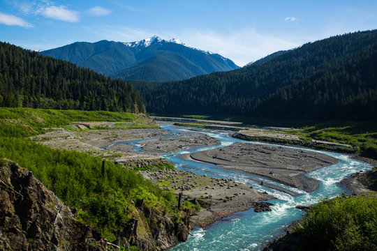Jefferson County, Washington State. Olympic National Park, Elwha River. Olympic Mountains, forest clearing and sediment