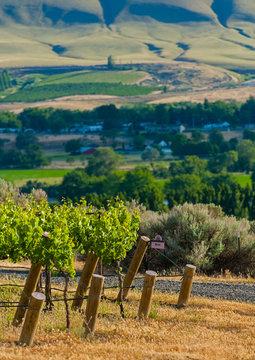 USA, Washington, Benton City, Red Mountain. Vineyard in Yakima Valley, WA.