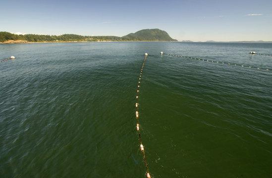 Reefnet Fishing on Legoe Bay, Lummi Island, Washington, US