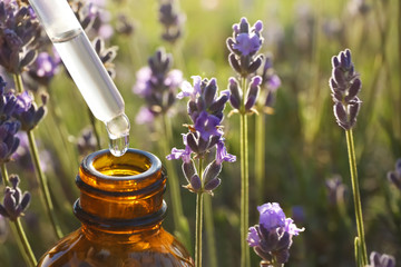 Obraz Dropper with lavender essential oil over bottle in blooming field, closeup. Space for text - fototapety do salonu