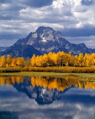 Fototapete - USA, Wyoming, Grand Teton NP. Against the blue-gray peaks of the Tetons, glowing fall aspen are reflected in the still waters of Oxbow Bend, in Grand Teton NP, Wyoming.
