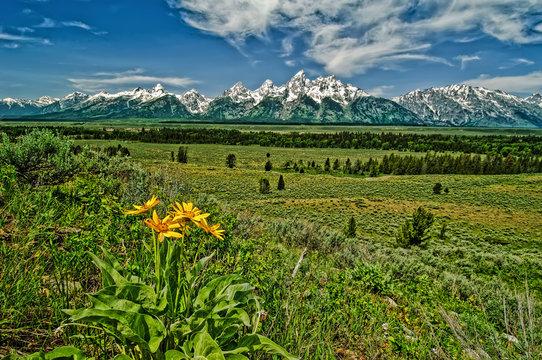 USA, Wyoming, Grand Teton National Park, wildflowers and Teton Range