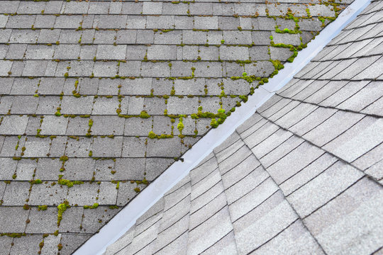 Different two parts of grey bitumen asphalt shingles roof one part overgrown with green moss other clean.