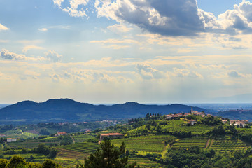 The beautiful vineyard of Collio, Friuli Venezia-Giulia, Italy Fototapete