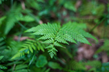 Close up of beautiful fern leaf, frond