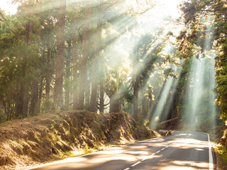 Sun rays in the forest on the road