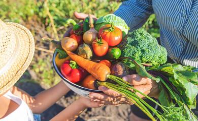 In de dag Keuken Child and grandmother in the garden with vegetables in their hands. Selective focus.