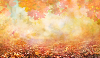 autumn leaves in beautiful fall park abstract background