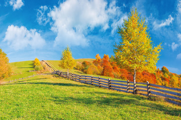 rural area in mountains. beautiful autumn weather on a sunny day. wooden fence along the country road uphill. trees in fall foliage. blue sky with clouds