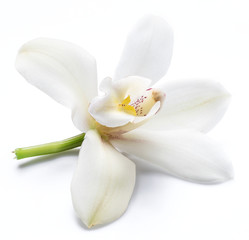 Deurstickers Orchidee Vanilla orchid vanilla flower isolated on white background.