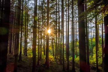 Wall Murals Forest Sunlight in a Mixed forest, Bavaria, Germany