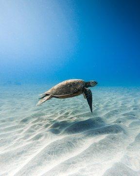 Beautiful closeup shot of a kemp's ridley sea turtle swimming underwater