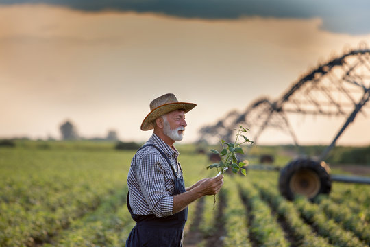Farmer in front of irrigation system in field