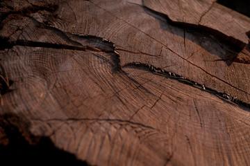 Wood texture. Tree stump background. Pattern of tree stump background.