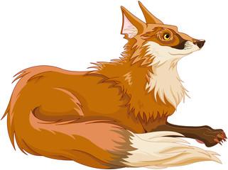 Foto op Canvas Sprookjeswereld Fox