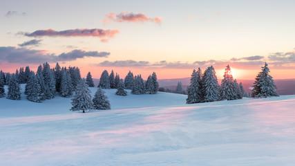 Foto auf Leinwand Himmelblau Sonnenuntergang über verschneiten Tannen
