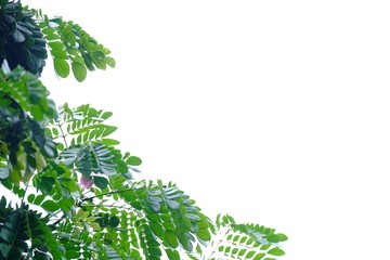 Tropical tree leaves on white isolated background for green foliage backdrop  Wall mural
