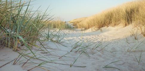 Fototapete - Dünengras am Meer