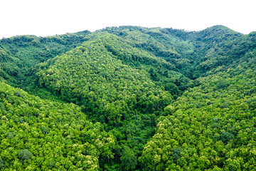 landscape aerial  view  mountain green natural forest in the rain season on white background isolate Wall mural