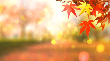 Fototapeten Koralle web banner design for autumn season and end year activity with red and yellow leaves with soft focus light and bokeh background