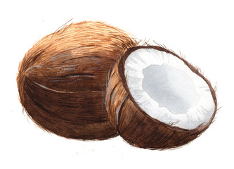 Watercolor single coconut tropical food nut isolated on a white background illustration