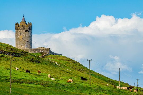Beautiful view of a field with cattle grazing with the Doonagore Castle tower in the background in the coastal town of Doolin, Wild Atlantic Way, sunny spring day in county Clare in Ireland