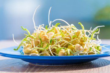 green sprouts growing in white tray, baby vegetables. Raw sprouts, microgreens, healthy eating concept