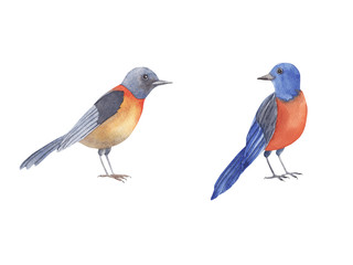Bird watercolor set. Hand painted illustration little blue bird isolated on white background.