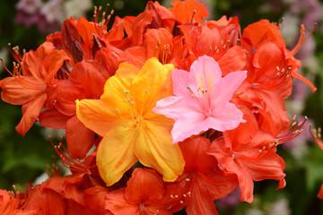 Blumen 1135