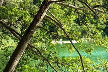 Tree bough at the lake