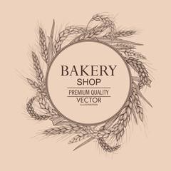 Vector hand drawn wheat ears. Farm field illustration. For packing.Bunch of grain barley.Banner design. Barley illustration in vintage style.Wheat grain,granule, kernel,corn,rye,barley,oats,pic.