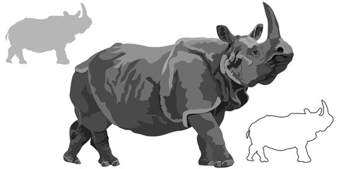 Indian rhinoceros on white