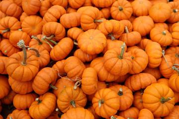 Fresh healthy bio pumpkins on farmer agricultural market at autumn.