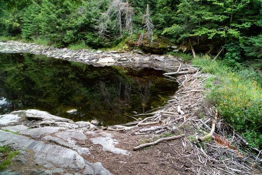 Beaver Dam in Canadian lake