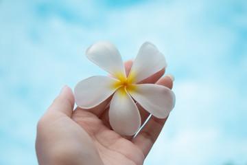 Tuinposter Frangipani Woman hand holding white plumeria flower on blue sky.