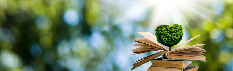 A stylized image of a tree in the shape of a heart on books on a background of a fantastic landscape.