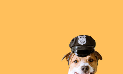 Funny dog wearing police officer peaked cap as working dog concept