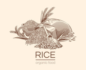 Sketch rice background. Agricultural plant, vintage hand drawn organic rice seeds and sack of grains. Diet engraving vector design