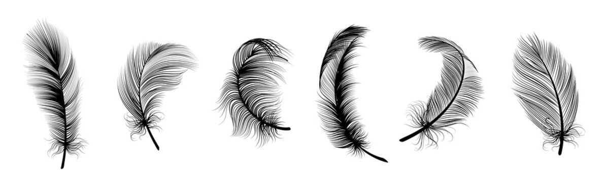 Black fluffy feather. Hand drawing vintage art realistic quill feathers for pen detailed isolated vector set
