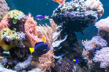 Fond de hotte en verre imprimé Recifs coralliens Rafa koralowa | Coral reef