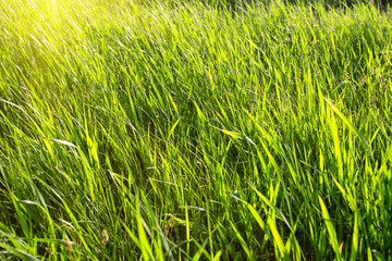 Green grass lit by the bright sun