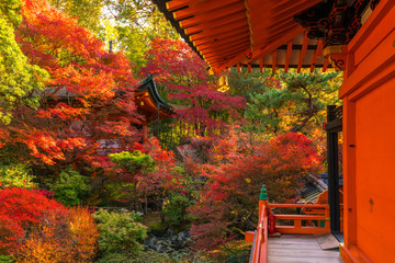 Japan autumn image. Bishamon-do temple in Kyoto city