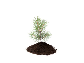 Small pine tree in pile of soil isolated on white, studio shot. Planting new trees in forest. Environmentally friendly lifestyle and renewing investing in forest concept. Lot of copy space.