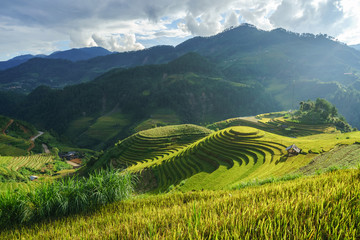 Acrylic Prints Rice fields Terraced rice field in harvest season in Mu Cang Chai, Vietnam. Mam Xoi popular travel destination.