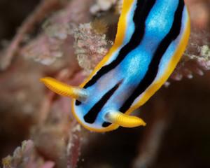 Marine life, Liuqiu island, Taiwan
