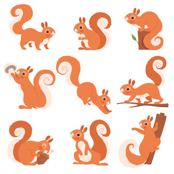 Cartoon squirrel. Funny forest wild animals running standing and jumping vector squirrel clip art collection. Squirrel wild, wildlife animal mammal illustration