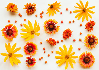 orange, yellow and red autumn flowers and rowan berries on a white background with place for text. autumn background