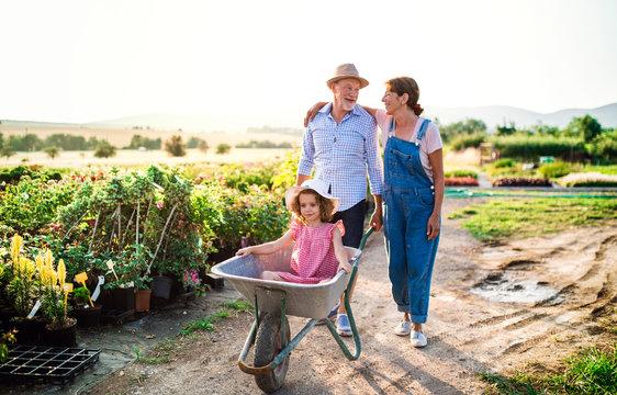 Senior grandparents pushing granddaughter in wheelbarrow when gardening.