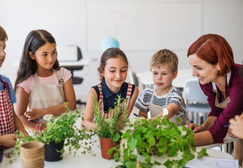 A group of small school kids with teacher standing in class, planting herbs.