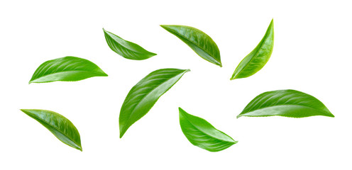 Green tea leaf collection isolated on white background Wall mural